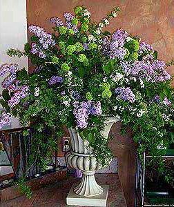 Flowers & Decor, pink, green, Flowers, Cattails