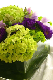 Flowers & Decor, purple, green, Flowers, Nancy liu chin