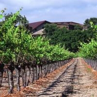 Santa barbara wine country, Foley family wines