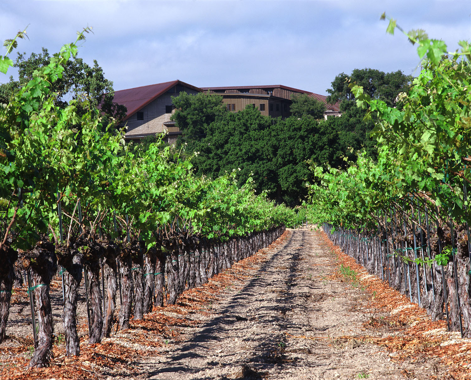 Santa barbara wine country, Foley family wines