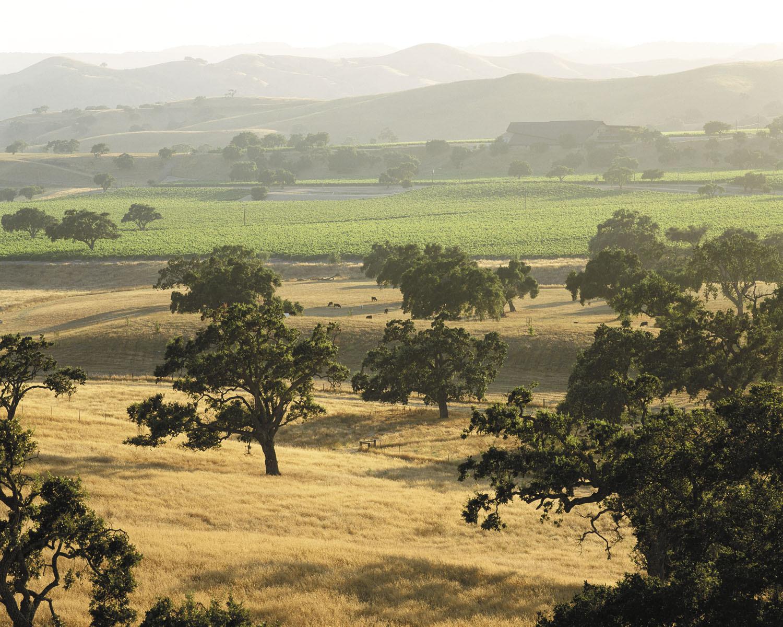 Santa barbara wine country, Foley family wines, Firestone vineyard, los olivos
