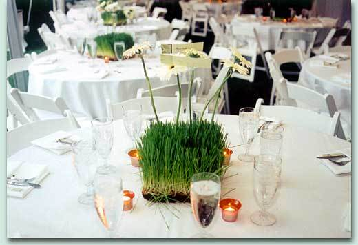 Flowers & Decor, green, Centerpieces, Flowers, Centerpiece, Grass, Contemporary catering and event planning services, Contemporary catering