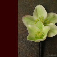 Flowers & Decor, green, Boutonnieres, Flowers, Boutonniere, Simply blooms