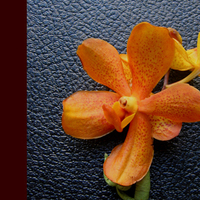 Flowers & Decor, orange, Boutonnieres, Flowers, Boutonniere, Simply blooms