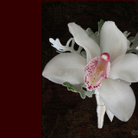 Flowers & Decor, white, Boutonnieres, Flowers, Boutonniere, Simply blooms