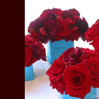 Flowers & Decor, red, blue, Flowers, Simply blooms