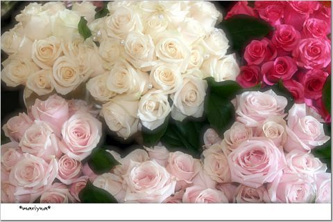 Flowers & Decor, pink, Flowers, Roses