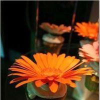 Flowers & Decor, Cakes, orange, cake, Flowers