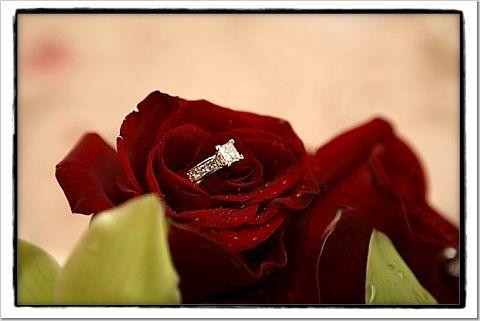 red, Ring, Rose