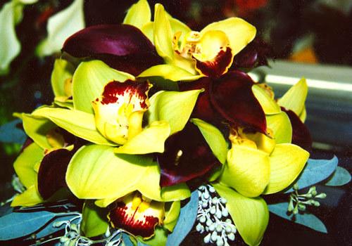 Flowers & Decor, green, Flowers, Black eyed suzies