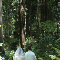 Bride, Groom, Nestldown, Redwoods