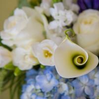 Flowers & Decor, white, blue, Flowers, Calla, Kali kraum photography