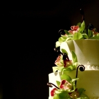 Photography, Cakes, cake, planner, Wedding, Florals, Hawaii weddings and events, Frank, Amodo, Peony, Service, Full