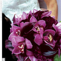 purple, Orchid, Calla