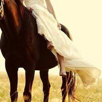 Horse, Ttd