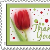 red, Bride, Tulip, You, Thank, Marriage, Everafter stamps