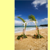 Flowers & Decor, Tables & Seating, Flowers, Wedding, Chairs, Decorations, Loose, Maui sunset ceremonies