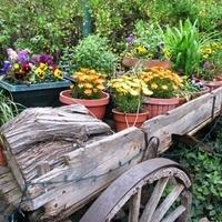 Ceremony, Flowers & Decor, yellow, orange, Ceremony Flowers, Spring, Rustic, Flowers, Rustic Wedding Flowers & Decor, El pinto restaurant