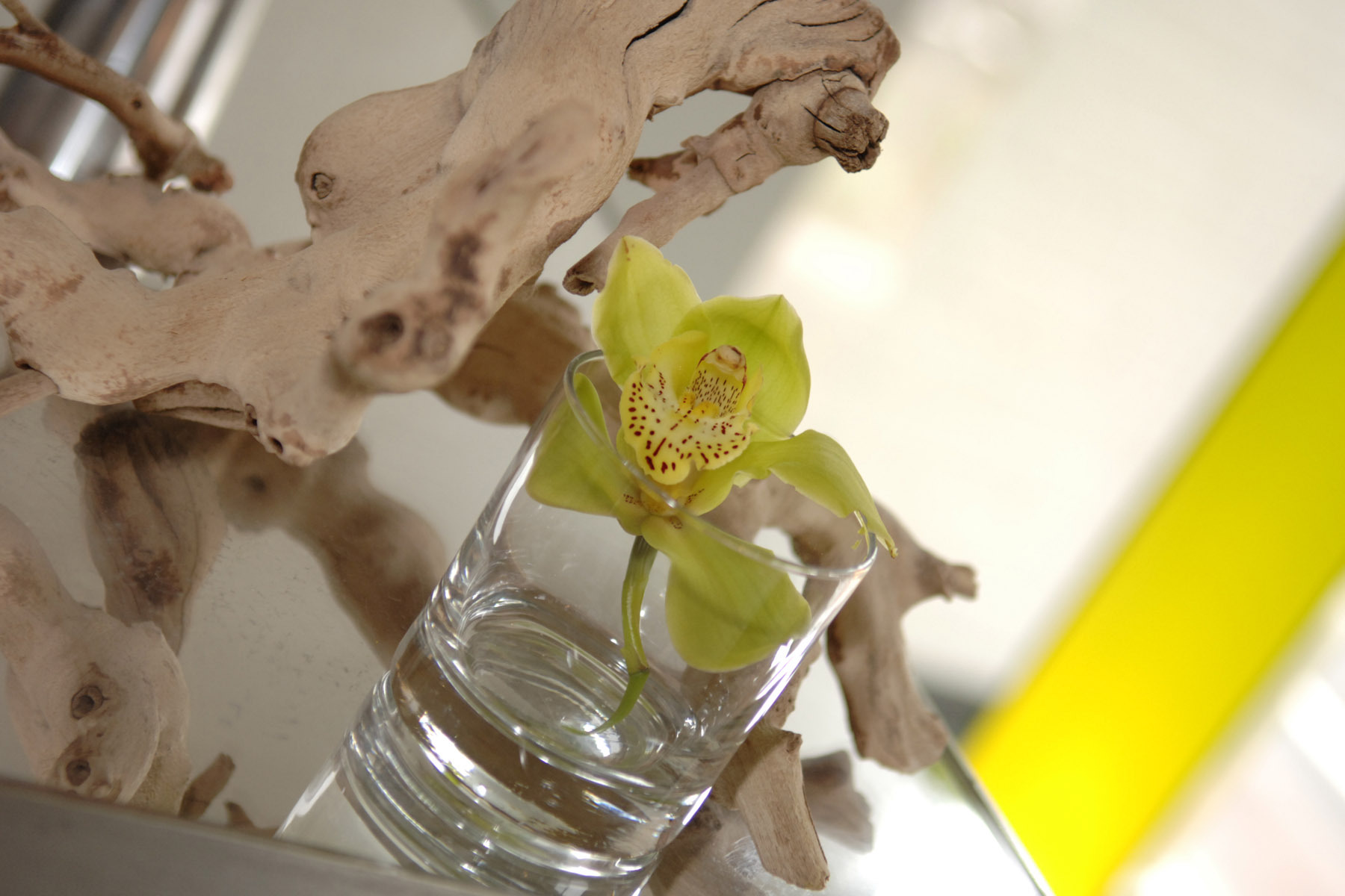 Flowers & Decor, green, Flowers, Orchid, Cymbidium, Single