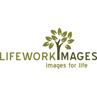 Photography, Wedding, Logo, Seattle, Photographers, Chicago, Photojournalists, Brand, Phtojournalism