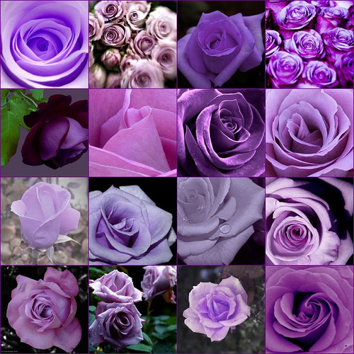 Flowers & Decor, purple, Flowers, Roses