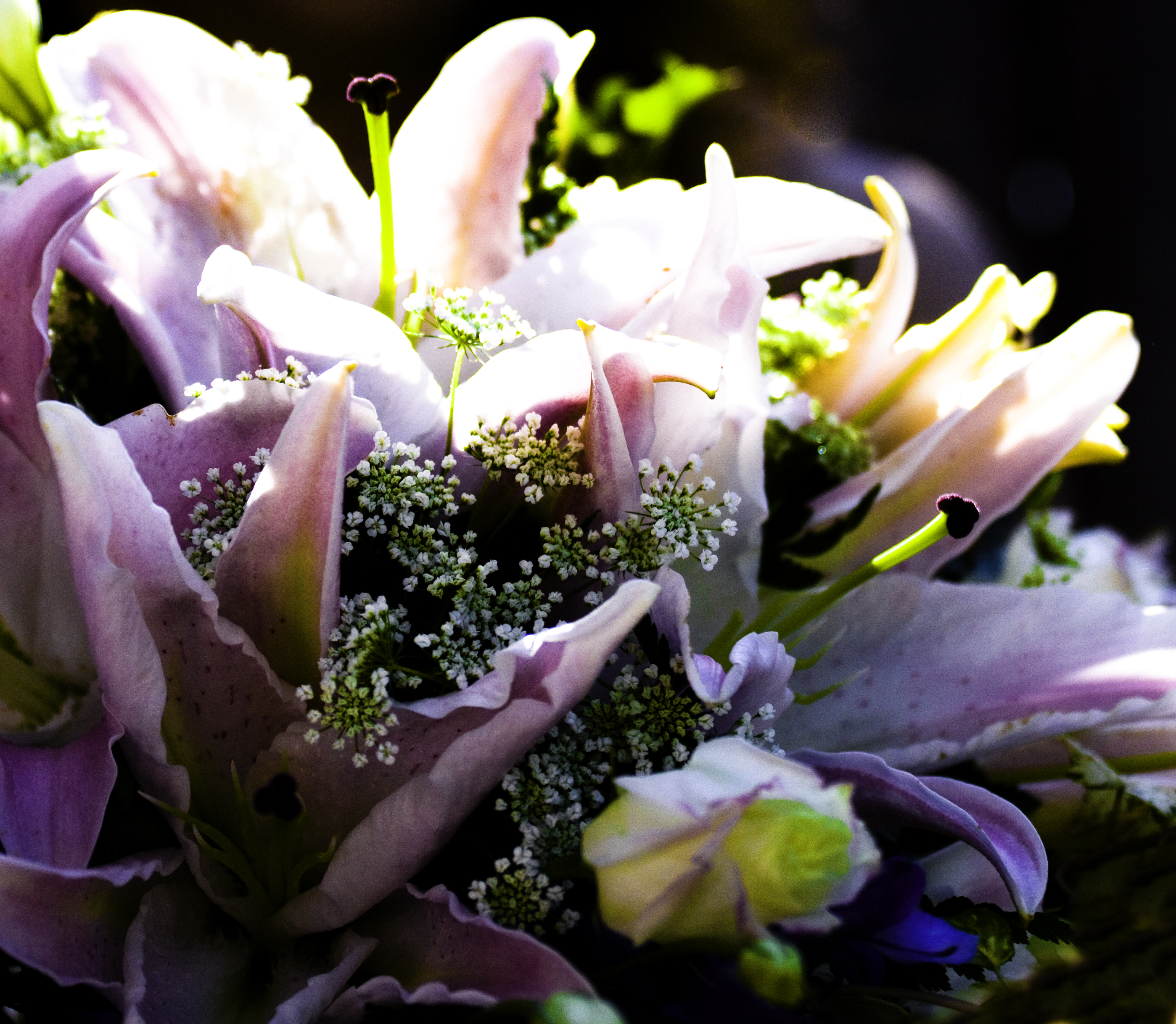 Flowers & Decor, Bride Bouquets, Flowers, Bouquet, Star, Lillies, Mar photography, Gazer