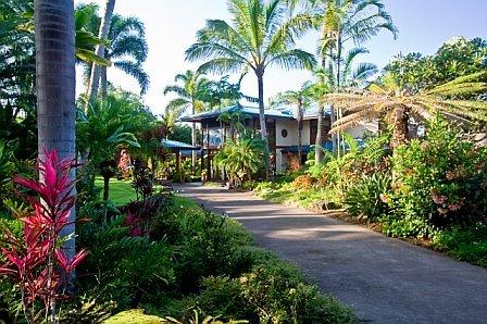 Destinations, Hawaii, Wedding, Location, Island, Kona, Big, Weddingsreunionshawaii