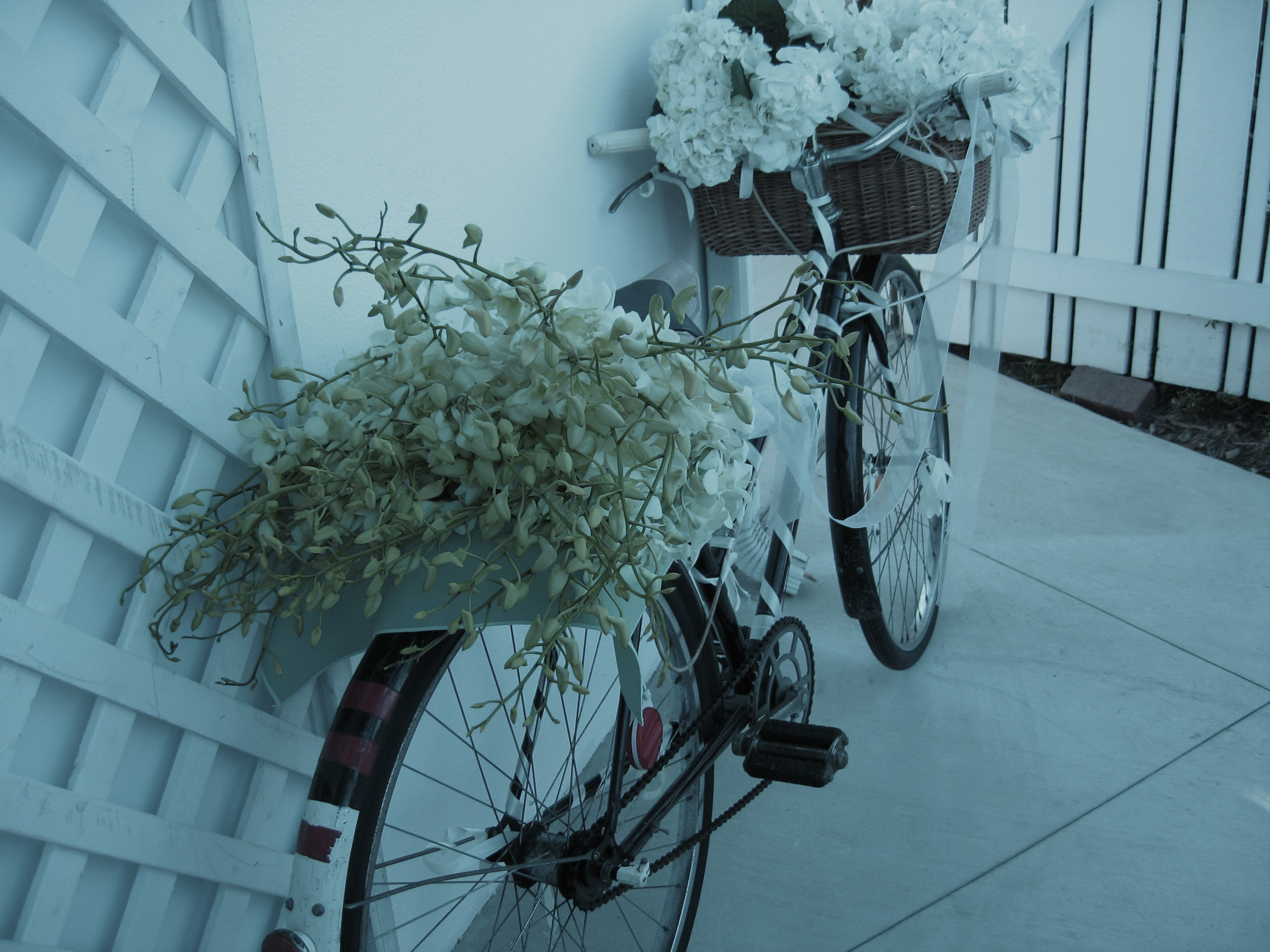 Orchids, Catering, Antique, Choice, critics, dendrobian, Bicycle