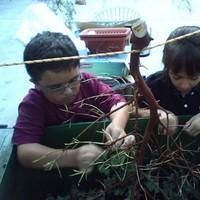 Branches, Manzanita