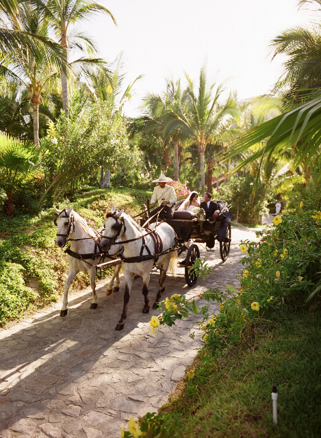 Destinations, Mexico, Beach, Destination, Michelle nathan, Horse drawn carriage, Wedding transportation
