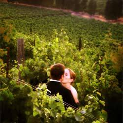 Wedding, Winery, Viansa, Country, Wine, Napa, Sonoma, Awesomeshot studios