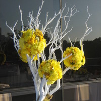 Centerpiece, Manzanita, Sassy girl weddings events
