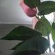 1375016908_small_thumb_e97edc943d3aa3263fbfbe7ef289d856