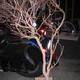 1375017288 small thumb 47bbe2d2b264c6408157a88f76ed096d