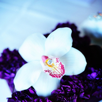 Flowers & Decor, purple, Flowers, Ringbearer