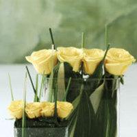 Roses, Centerpiece