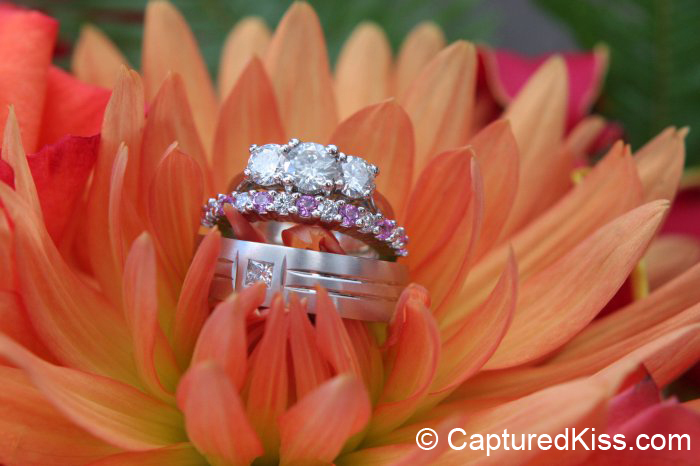 orange, pink, Wedding Bands, Rings, Captured kiss photography, Sherbert, Chrysanthemums