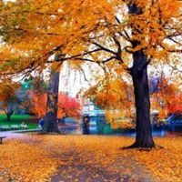 Fall, In, Boston, Scene