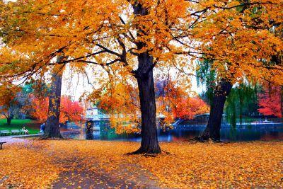 Fall, In, Boston, Scene