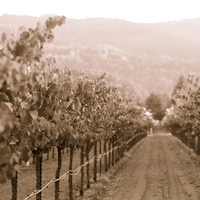 Harvest inn, Napa, Vineyards, St helena