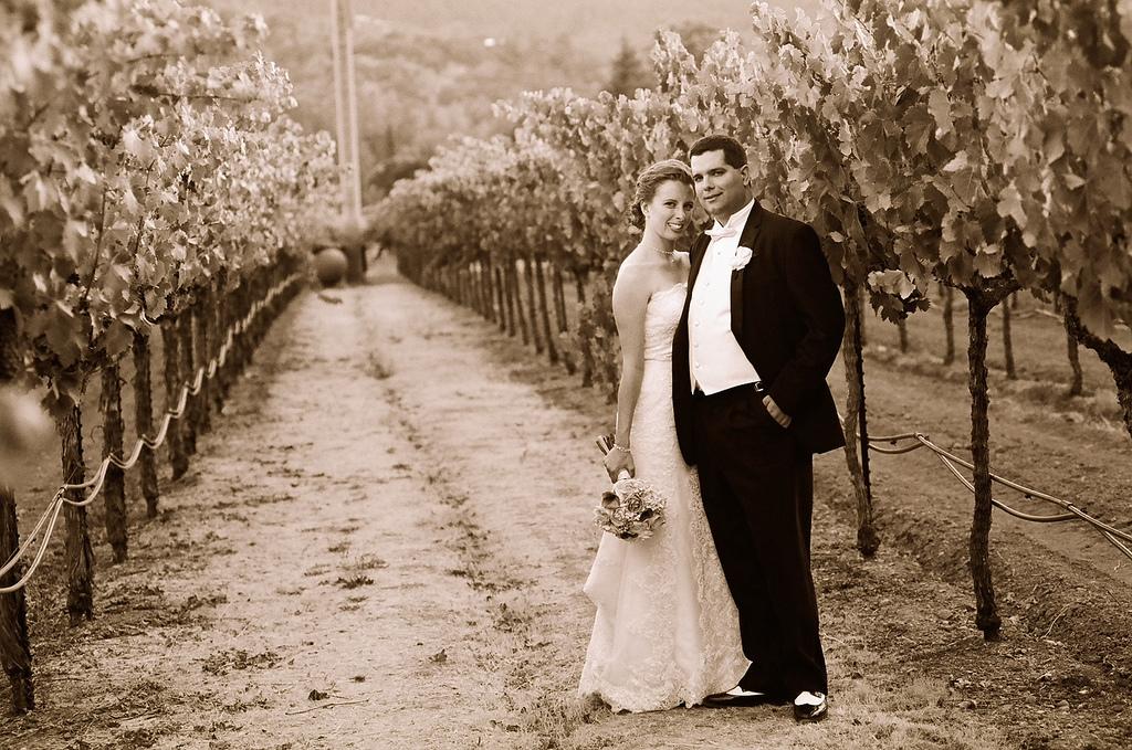 Harvest inn, Vineyards