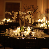 Reception, Flowers & Decor, Decor, green, brown, Flowers, Orchid