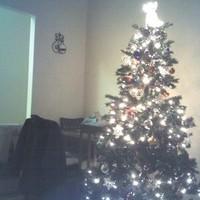 Tree, Christmas