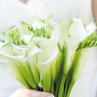 white, Bouquet, Calla, Grandiflora