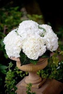 Flowers & Decor, Flowers, Hydrangeas