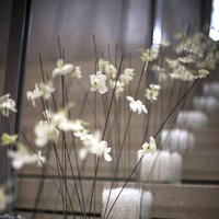 Flowers & Decor, white, Aisle Decor, Flowers, Orchid, Aisle, Whimsical