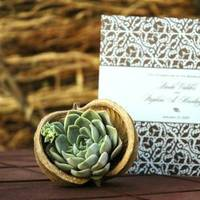 Flowers & Decor, Favors & Gifts, white, green, brown, Favors, Flowers, Succulent