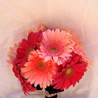 Flowers & Decor, pink, black, Bride Bouquets, Flowers, Bouquet, Daisy, Polk-a-dots