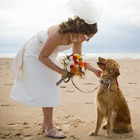 Wedding Dresses, Veils, Beach Wedding Dresses, Fashion, dress, Beach, Portrait, Veil, Ring, Dog, Short, Bearer, Anne ruthmann photography, Short Wedding Dresses