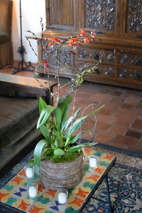 Orchids, Pollen botanical design studio